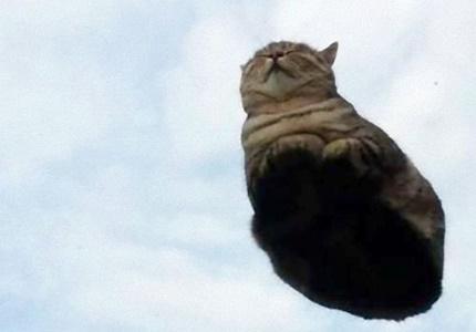 grass-cat-i