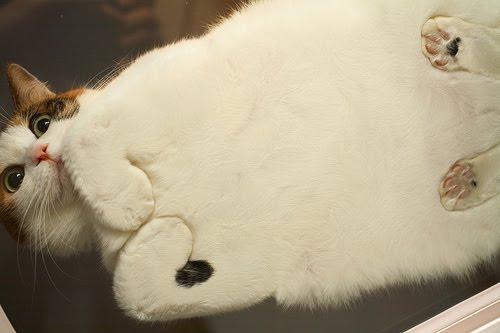 grass-cat2