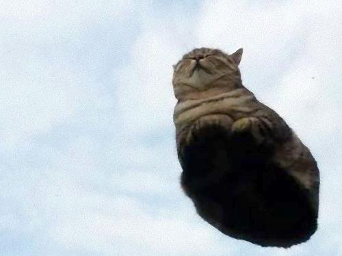 grass-cat3