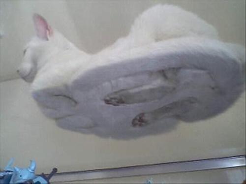 grass-cat4