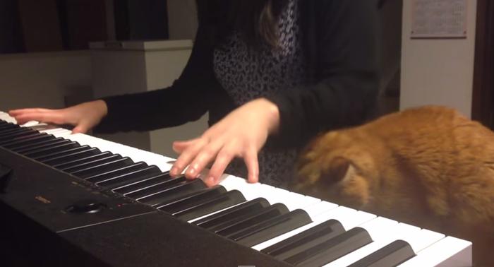 piano001cat