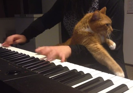 piano004cat