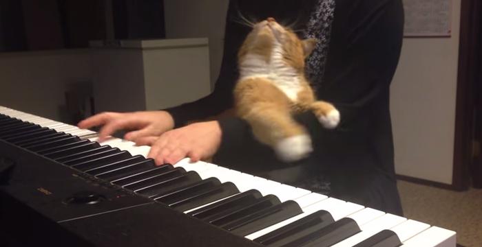 piano005cat