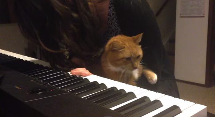 piano006cat