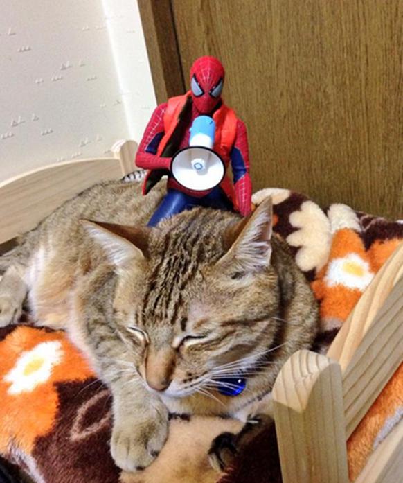 spider-neko2