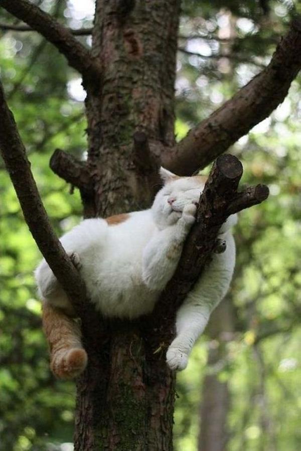 tree002cat