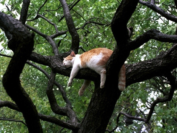 tree003cat