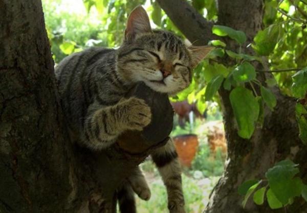 tree005cat