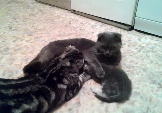 紛れ込む猫