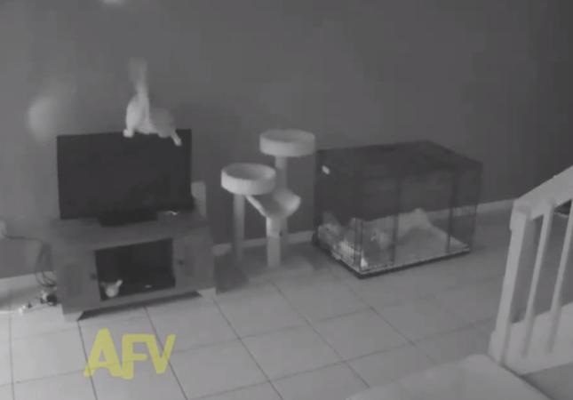 暴れん坊将軍な猫