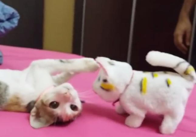 動くおもちゃと子猫