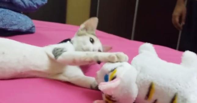 強烈な猫パンチ!
