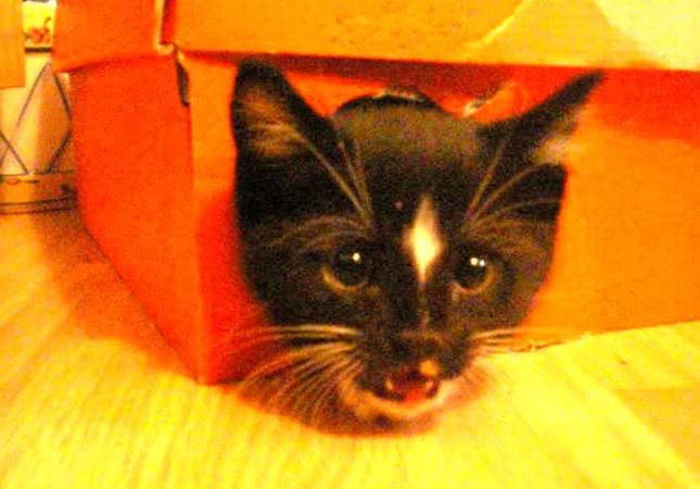 箱から子猫