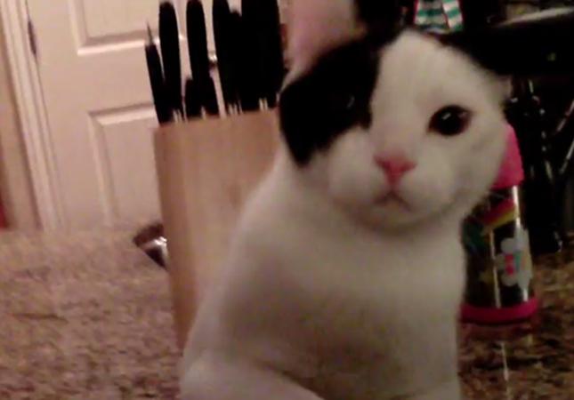 ドローンに猫パンチを繰り出す猫