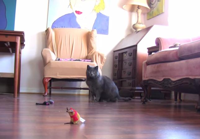 猫動画を逆再生