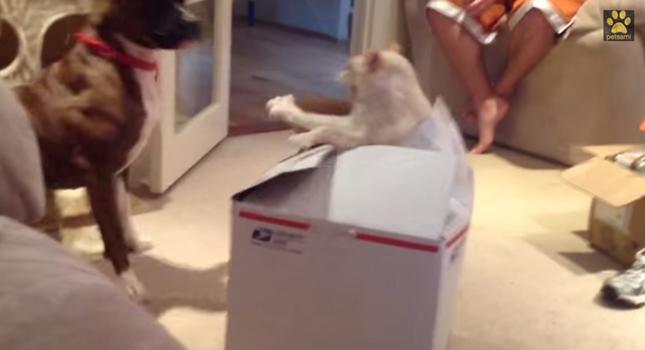 猫「バァッッッ!!」