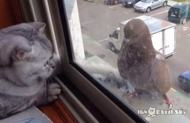 優しい猫パンチを繰り出す猫。