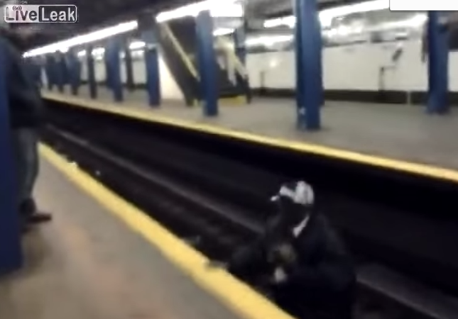 駅のホームから子猫を救助