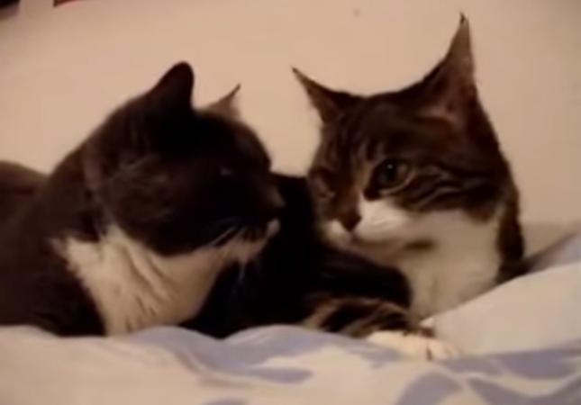井戸端会議をする猫達