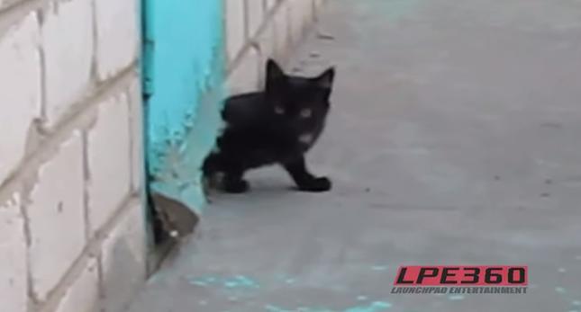 大活躍の子猫