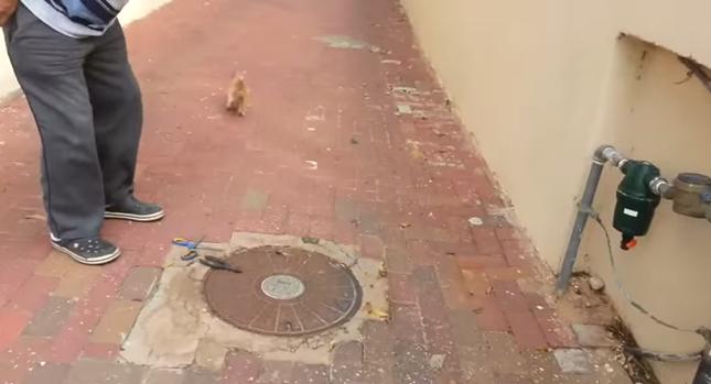 元気に走り去っていく子猫。
