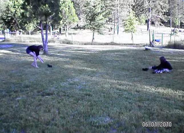 フライングする2匹の子猫