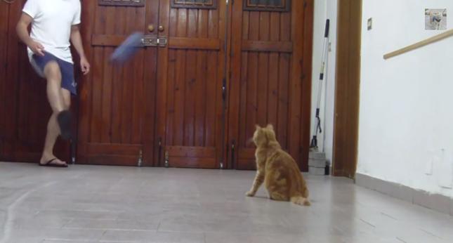ボールをふわり上げる飼い主さん。