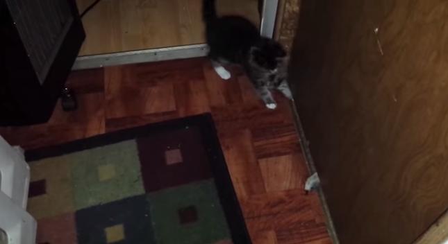 モンスターに猫パンチを繰り出す子猫。