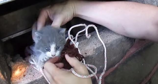 網と紐を使い何とか子猫を救助