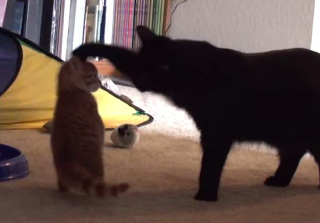わんぱく子猫