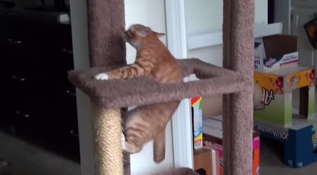 木登り特訓!