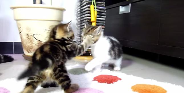 子猫パンチ!