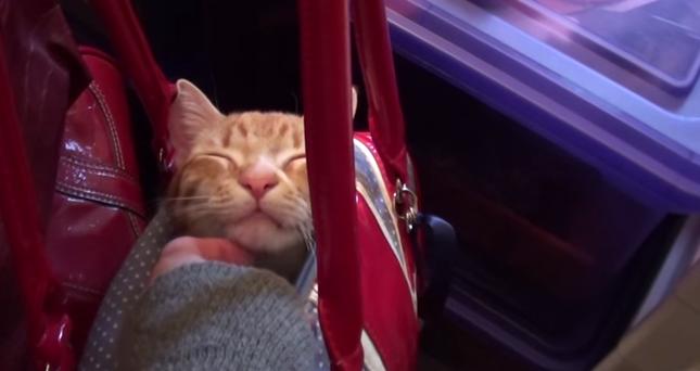 やっぱり急に眠くなる子猫