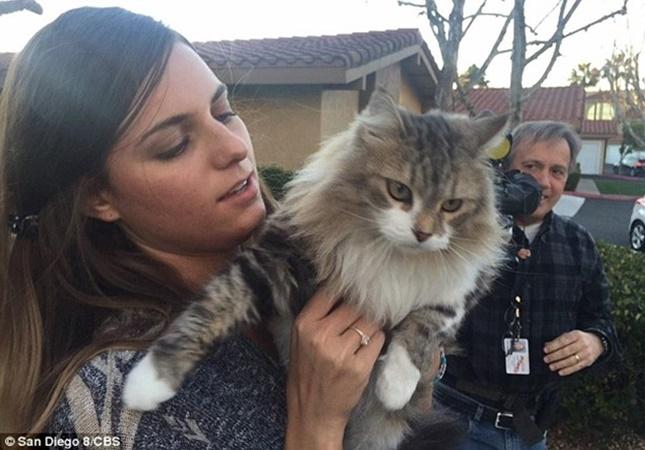バンパーから救出された猫