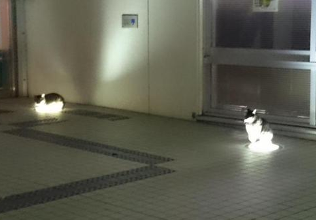 light-cat