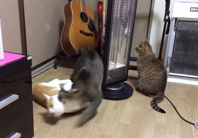 クルクル回される猫