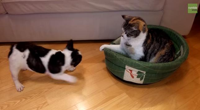 犬「ベッドを返してよ!」