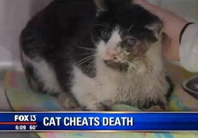 ゾンビ猫奇跡の生還