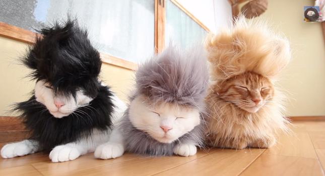 シュールな3匹のモヒカン猫