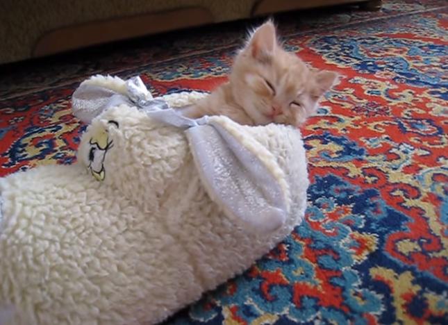 睡魔が訪れる子猫