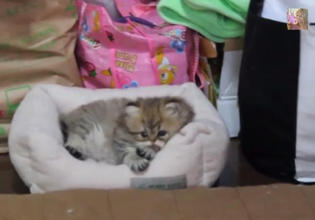 怠け者な子猫