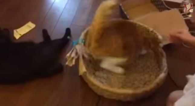 やっぱり1秒で戻る猫