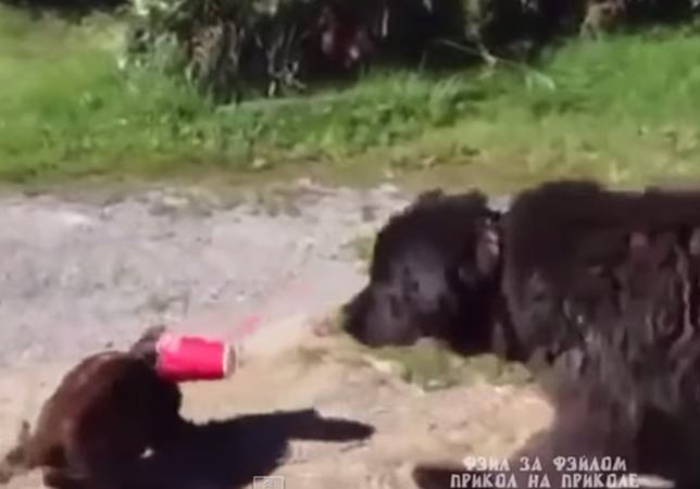 紙コップに挟まった猫を助ける犬