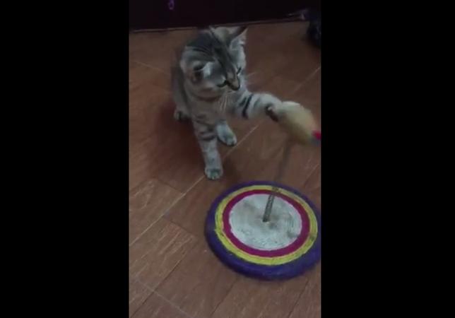 猫パンチを猛特訓する子猫