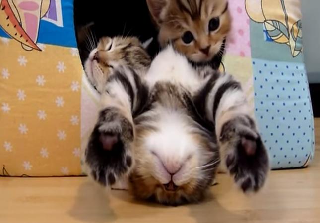 おねむな子猫達