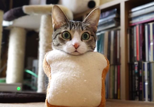 先日紹介した可愛すぎる猫おはぎパン