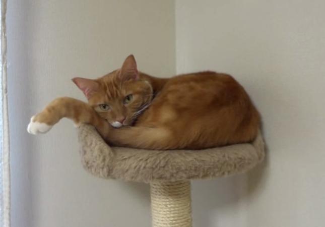 手首プラプラ猫