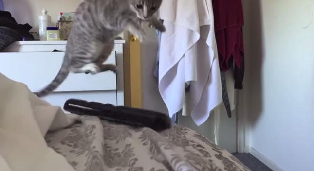 怖がりすぎて猫パンチ&ジャンプでフレームアウト