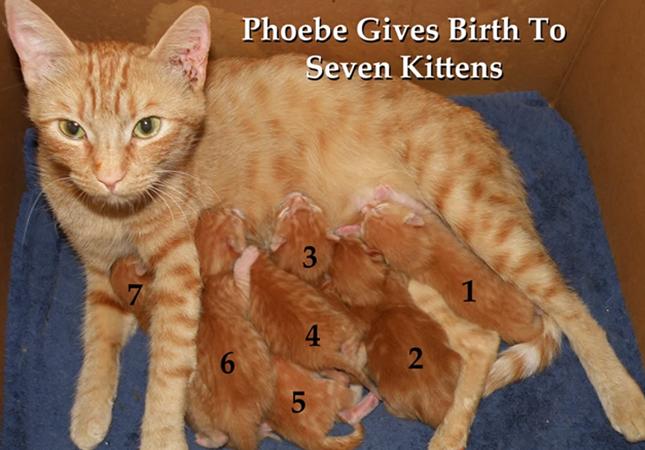 7匹の子猫を出産した母猫