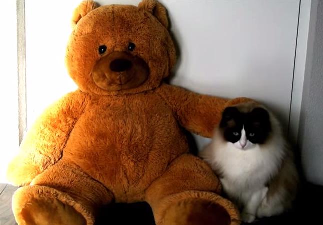 テディベアが大好きな猫
